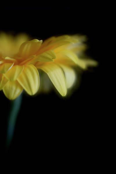 Photograph - Softly by Cyndy Doty