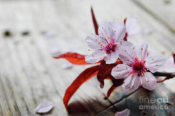 Photograph - Spring Blossom by Jelena Jovanovic