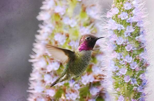 Photograph - Spring Fling by Fraida Gutovich