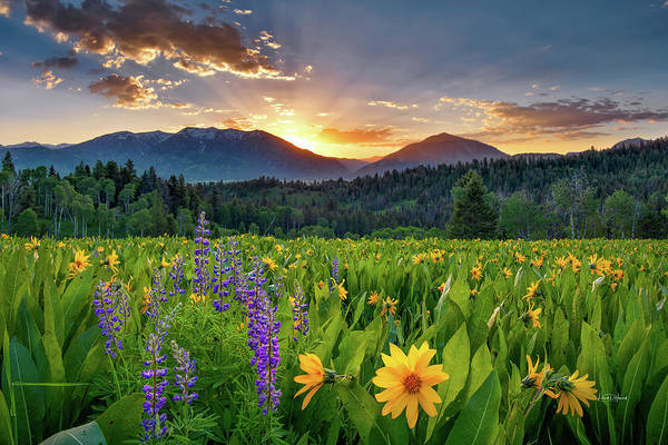 Photograph - Spring's Delight by Leland D Howard