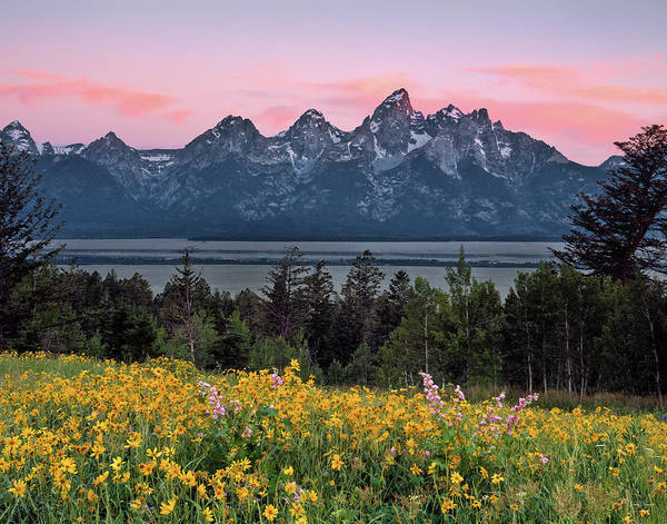 Teton Photograph - Teton Spring by Leland D Howard