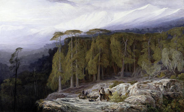 Wall Art - Painting - The Forest Of Valdoniello by Corsica-Edward Lear