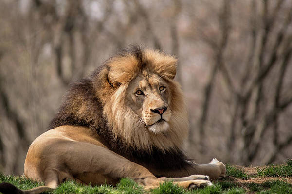 Photograph - The King by Don Johnson