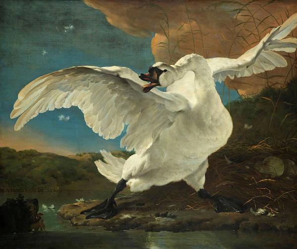 Cygnet Wall Art - Painting - The Threatened Swan, 1650 by Jan Asselijn