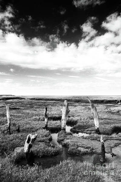 Wall Art - Photograph - Thornham Stumps by John Edwards