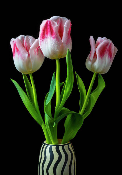 Wall Art - Photograph - Three Lovely Tulips by Garry Gay