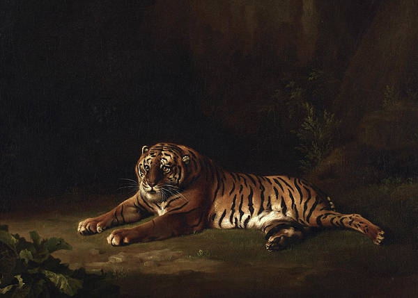 Wall Art - Painting - Tiger by George Stubbs
