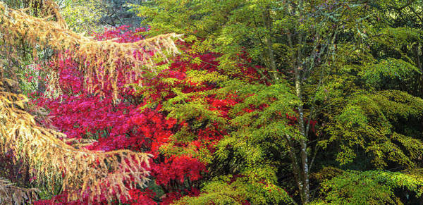 Wall Art - Photograph - Trees In Autumn, Westonbirt Arboretum by Panoramic Images