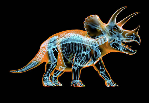 Wall Art - Photograph - Triceratops Skeleton With X-ray Effect by Leonello Calvetti