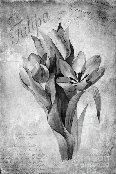 Tulip Bloom Painting - Tulipa by John Edwards
