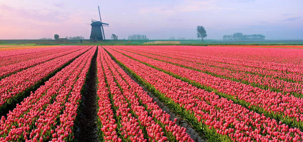 Wall Art - Photograph - Tulips And Windmill by Jacobh