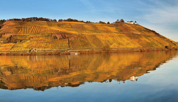 Wall Art - Photograph - View Of Marienburg Castle Over Vineyards In Autumn Puenderich Moselle Rhineland-palatinate Germany by imageBROKER - Franz Walter