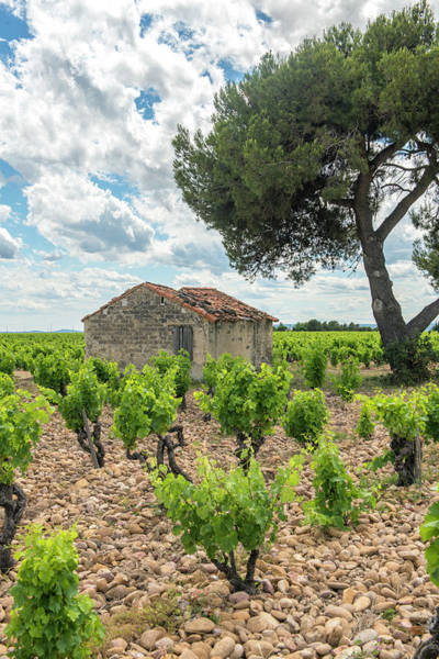 Chateauneuf Photograph - Vineyard, Chateauneuf Du Pape, France by Jim Engelbrecht