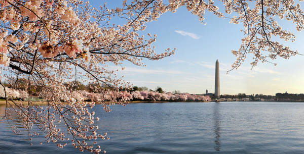 Tidal Basin Photograph - Washington Dc Cherry Blossoms And by Ogphoto