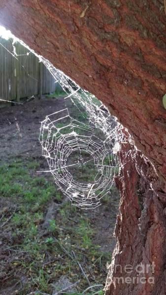 Mixed Media - Web Of Life by Joyce Woodhouse