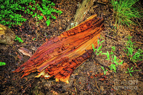Photograph - Wet Wood by Jon Burch Photography