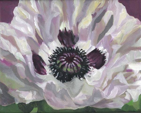 Painting - White Poppy by Alfred Ng