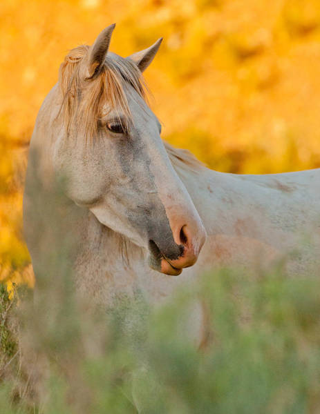 Wall Art - Photograph - Wild Horse by Michael Lustbader