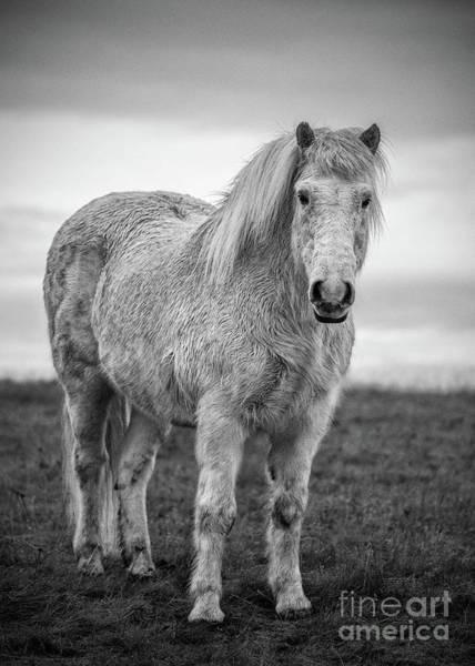 Wall Art - Photograph - Wild Icelandic Horses by Jamie Pham