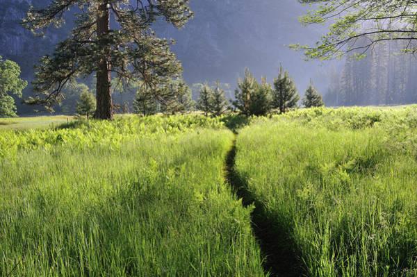 Photograph - Yosemite National Park, Usa by Aimin  Tang