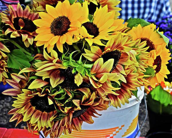 Photograph - 2019 Monona Farmers' Market July Sunflowers 1 by Janis Nussbaum Senungetuk