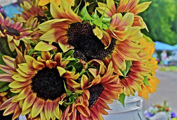 Photograph - 2019 Monona Farmers' Market July Sunflowers 2 by Janis Nussbaum Senungetuk