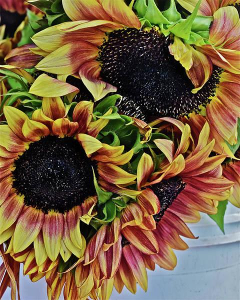 Photograph - 2019 Monona Farmers' Market July Sunflowers 3 by Janis Nussbaum Senungetuk