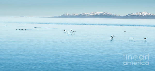 Photograph - Icelandic Landscapes Full Of Green Grass, Sea And Blue Sky. by Joaquin Corbalan