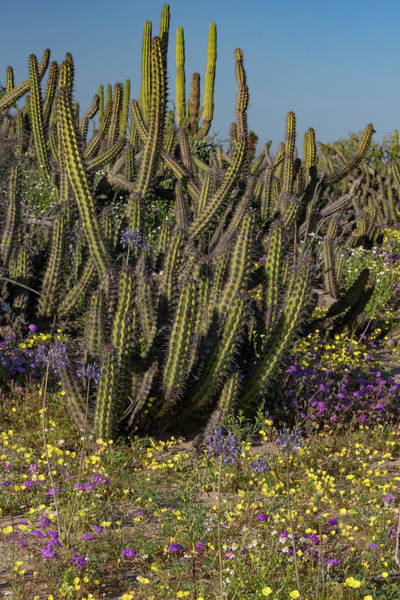 Wall Art - Photograph - Baja California, Mexico by Judith Zimmerman