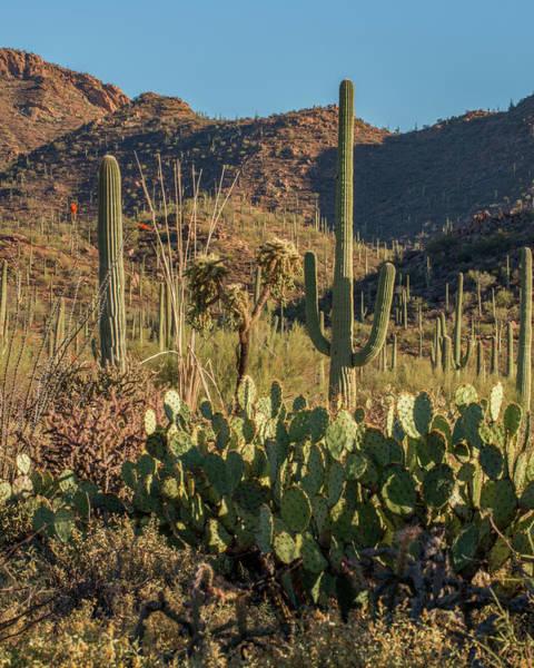 Wall Art - Photograph - Usa, Arizona, Tucson, Saguaro National by Peter Hawkins