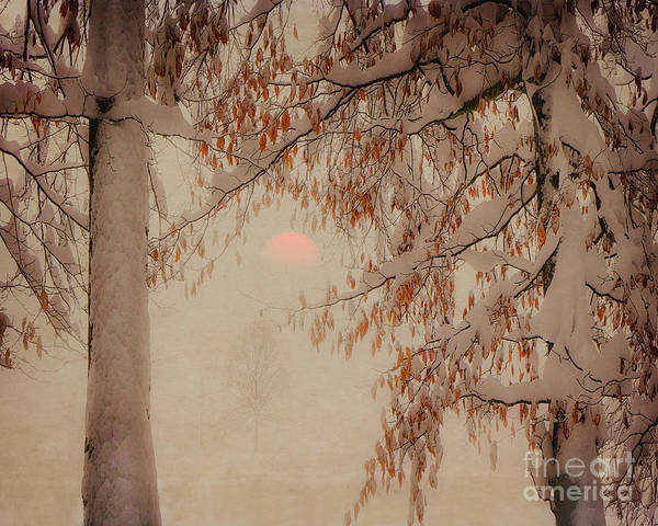 Photograph - A Winters Tale by Edmund Nagele