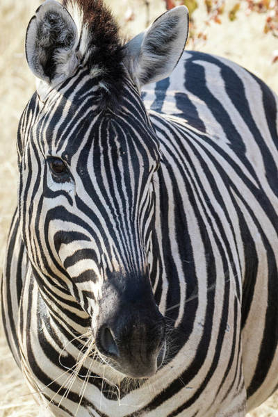 Wall Art - Photograph - Africa, Namibia, Etosha National Park by Hollice Looney