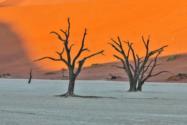 Wall Art - Photograph - Africa, Namibia, Sossusvlei by Hollice Looney