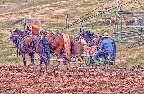 Vernon County Photograph - Amish Farming by Tommy Anderson