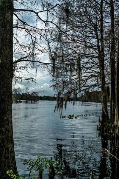 Lake Wall Art - Photograph - Around The Park by Ric Schafer