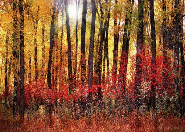 Photograph - Autumn Light by Leland D Howard