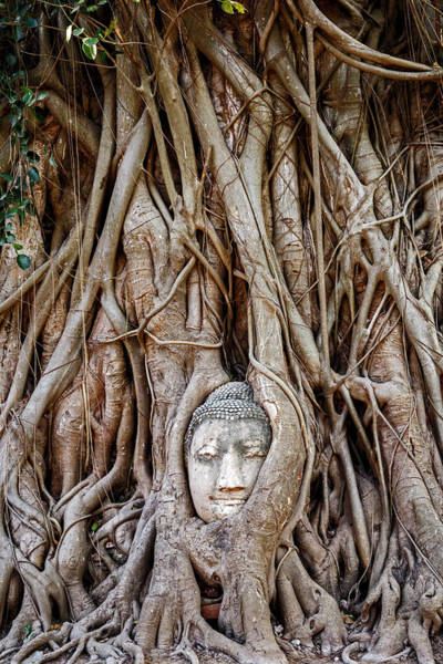 Wall Art - Photograph - Ayutthaya, Thailand by Miva Stock