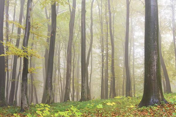 Orange Lichen Photograph - Beech Forest by Vidok