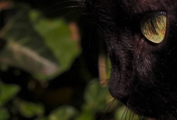 Photograph - Black Cat by Eye to Eye Xperience