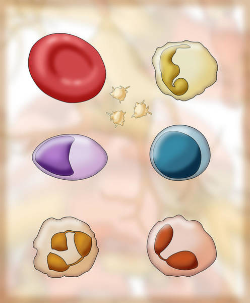 Wall Art - Photograph - Blood Cell Types, Illustration by Monica Schroeder