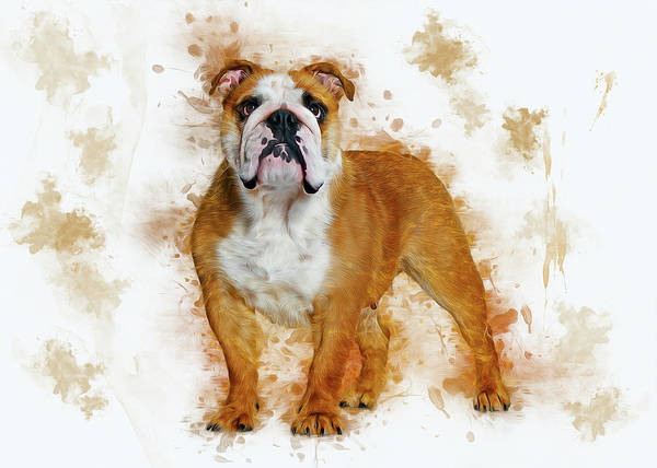 Digital Art - Bulldog by Ian Mitchell