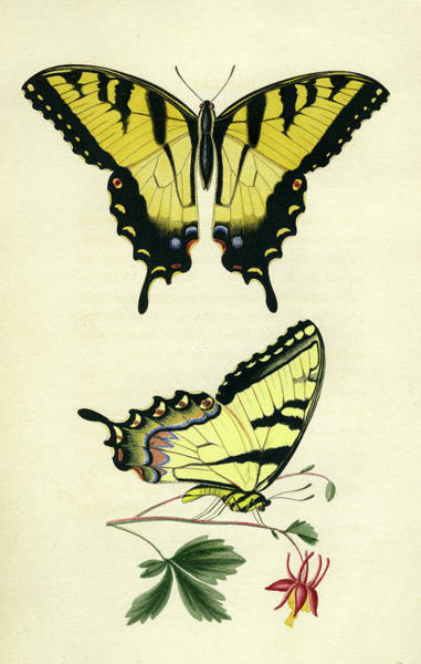 Photograph - Butterflies by Unknown