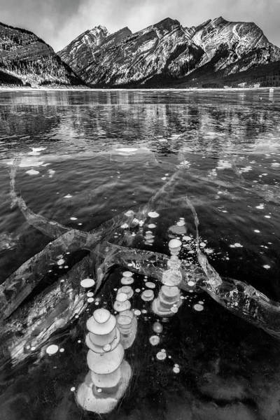 Wall Art - Photograph - Canada, Alberta, Spray Valley by Ann Collins