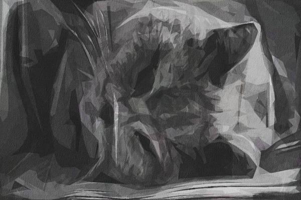 Wall Art - Digital Art - Cat British Shorthair Thoroughbred by Draw Sly