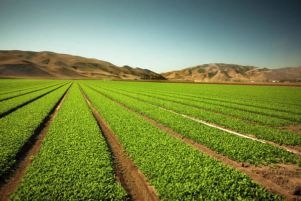 Equipment Photograph - Crops Grow On Fertile Farm Land by Pgiam