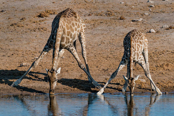 Wall Art - Photograph - Etosha National Park, Namibia, Africa by Karen Ann Sullivan
