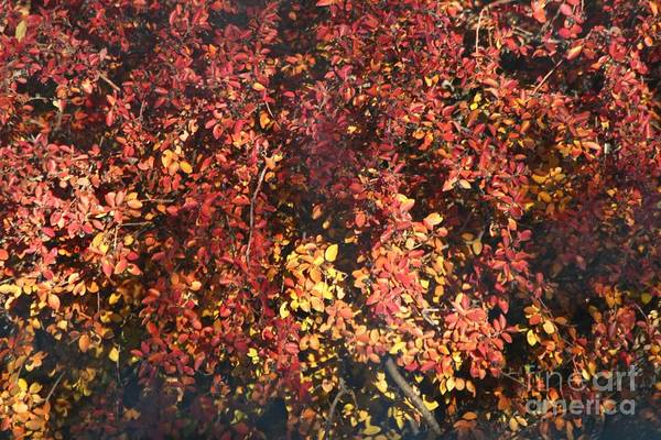 Photograph - Fall Leaves by Ann E Robson