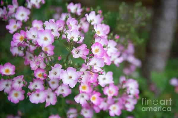 Photograph - Flowers by Jenny Potter