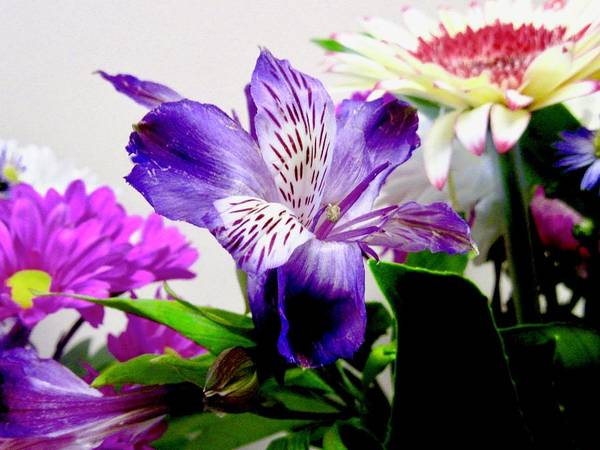 Photograph - Flowers by Stephanie Moore