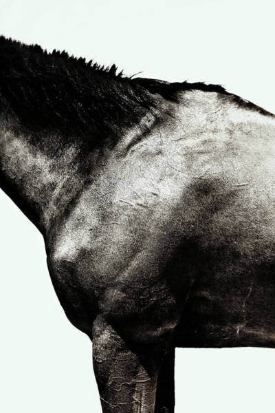 White Background Photograph - Horse by Yusuke Murata